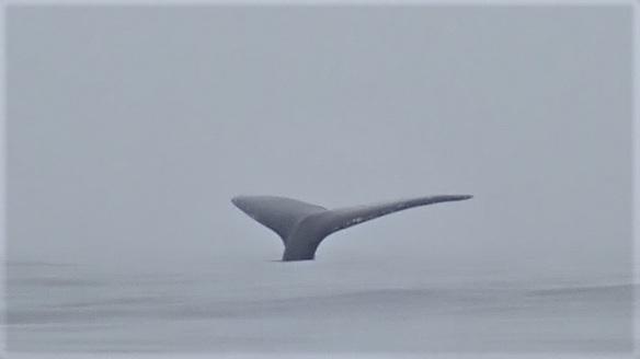 whale M